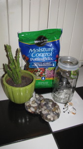 Everything you need to doctor up your cactus re-potting!